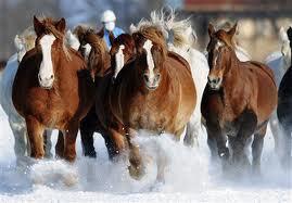 馬images.jpg